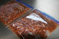 紅花インゲン豆 - 今夜の夕食