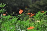 秋の色 - お散歩写真     O-edo line