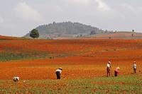 写真撮影ツアー、今度はシャン州へ9 - Myanmar Eye