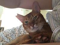 またもや扁桃炎 〜猫の介護士さん〜 - 「両手のない猫」チビタと愉快な仲間たち