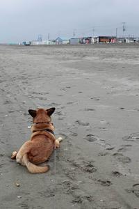 夏の終わり - 海と犬とカメラ