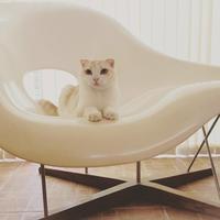 Vitra La chaise & トト丸 - @ interior space
