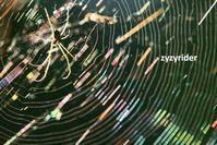 ひかる罠 - ジージーライダーの自然彩彩