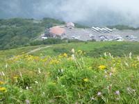 日本百名山伊吹山 (1,377.3M)    山頂 編 - 風の便り