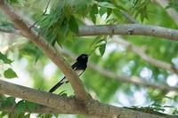 ホイホイ - 趣味の野鳥撮影