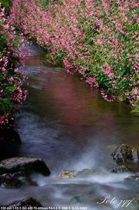 出流の秋海棠 その2・・・ - ぶらりカメラウォッチ・・