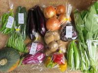 今週の野菜セット9月2週目 - まるみど農園のあれこれ日記
