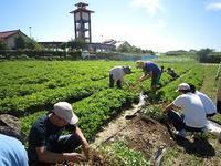 いよいよ来週!ラッカセイ収穫体験 - げんきの郷 「体験農園」