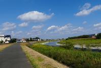 午後の浅川散歩・・残暑 - 浅川野鳥散歩