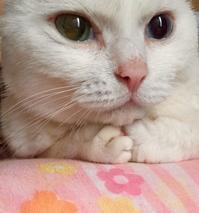 心が寒い猫 - 赤煉瓦洋館の雅茶子