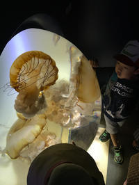 サンシャイン水族館その3 - ブリキの箱