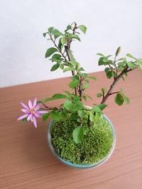 盆栽 - アーティスティックな陶器デザイナーになろう