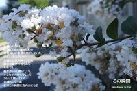 この瞬間 - 花の咲み、花のうた、きらめく地上 ―― photo&poem gallery kannon花音