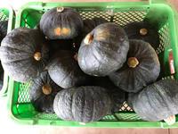 かぼちゃ - せいじつ野菜