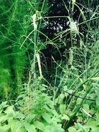 0831 緑の世界 - Healing Garden  ー草庭ー