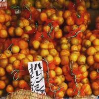 バレンシアオレンジ - ぶらり配達紀行 ー貸し布団配達ブログー