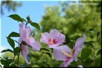 大通公園の花 - 北海道photo一撮り旅