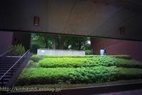 避暑の東京都美術館・・・2 - 桐一葉2