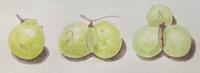 #植物スケッチ 『ムクロジの果実』 - スケッチ感察ノート