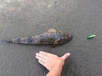 ほの暗い水の底から現れたのは・・・ - ロンの釣り、時々日常。