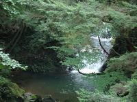 『渓流と滝と花達と・・・・・』 - 自然風の自然風だより