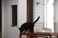 めざせ黒猫マスターへの道 その28 なるようになる - りきの毎日