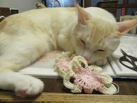 レース糸。 - 世帯主は猫なんです。