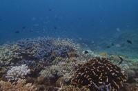 17.9.1318号、接近。。 - 沖縄本島 島んちゅガイドの『ダイビング日誌』