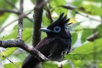 珍しい‥ - 趣味の野鳥撮影