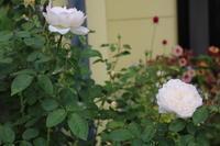娘が彼氏を連れてきた - my small garden~sugar plum~