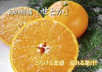 究極の柑橘「せとか」匠の技で、美しく、大きく、美味しく育てます!まもなくハウスのビニールはりです! - FLCパートナーズストア