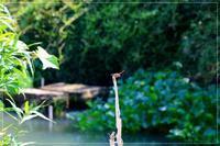 秋がそこに来た川沿い散歩 - 気ままにデジカメ散歩