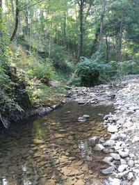 フィレンツェ、アルノ川の源流へ☆ - OLMI夫人の独りゴチ
