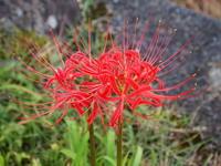 赤い花・白い花♪♪ - 自然の中でⅡ
