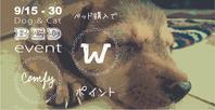 """ドッグ&キャット ベッドイベント """"Comfy"""" - Doggie Do!! / good dog and hello cat !!"""