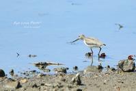 水辺の鳥たち - Eye Love Photo*