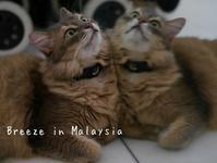 秋の風 - Breeze in Malaysia