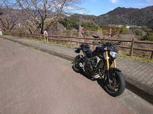 YAMAHA MT-09 - stay gold!