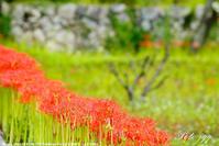 粟野の常楽寺 ・・・ - ぶらりカメラウォッチ・・
