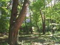今日も爽やか - 浅間高原・北軽井沢 ペンション・ローエングリンの高原日記