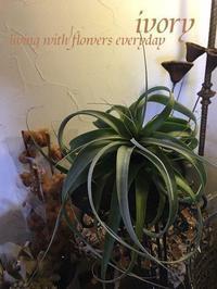心の余裕が………。 -  Flower and cafe 花空間 ivory (アイボリー)