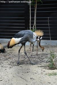 2017年9月天王寺動物園その6ドリルのドン - ハープの徒然草