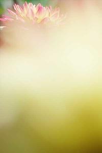 今日のふわラー #315 - ainosatoブログ02