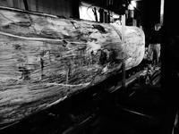 欅製材 - SOLiD「無垢材セレクトカタログ」/ 材木店・製材所 新発田屋(シバタヤ)