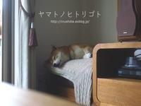 隠し撮り - yamatoのひとりごと