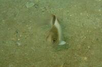 17.9.16天候・海況、悪いっすが - 沖縄本島 島んちゅガイドの『ダイビング日誌』
