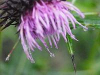 長野で見た花2 - 鹿深の森