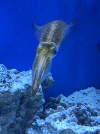サンシャイン水族館その6 - ブリキの箱