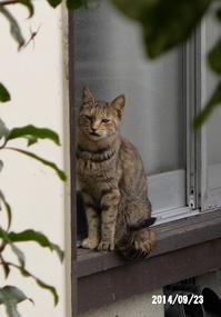 ソフィーのこと - 猫と自然と散歩の日々