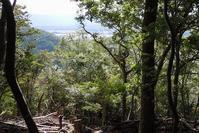山からの見晴らしと森の明るさを取り戻す - 大屋地爵士のJAZZYな生活
